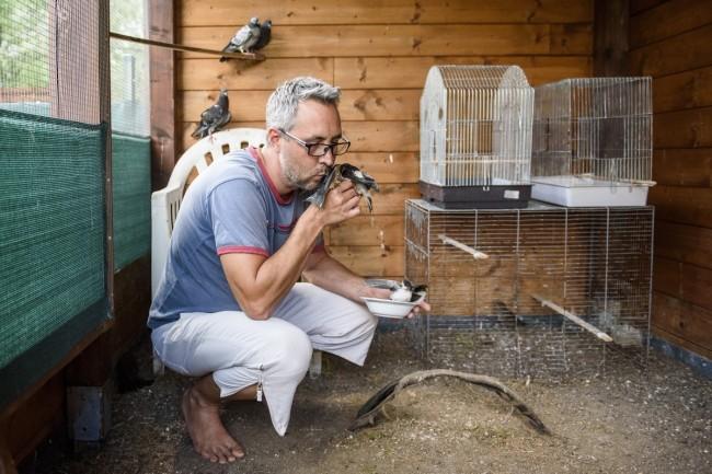 Mályi, 2017. augusztus 1. Lehoczky Krisztián, a Mályi Természetvédelmi Egyesület elnöke, a mentõállomás vezetõje fecskéket etet a mályi madármentõ állomáson 2017. július 27-én. Az egyesület madármentõ állomása mentési és tanácsadási céllal mûködik, munkatársai a település 30-40 kilométeres körzetében segítenek a rászoruló madarakon és kisemlõsökön. MTI Fotó: Komka Péter