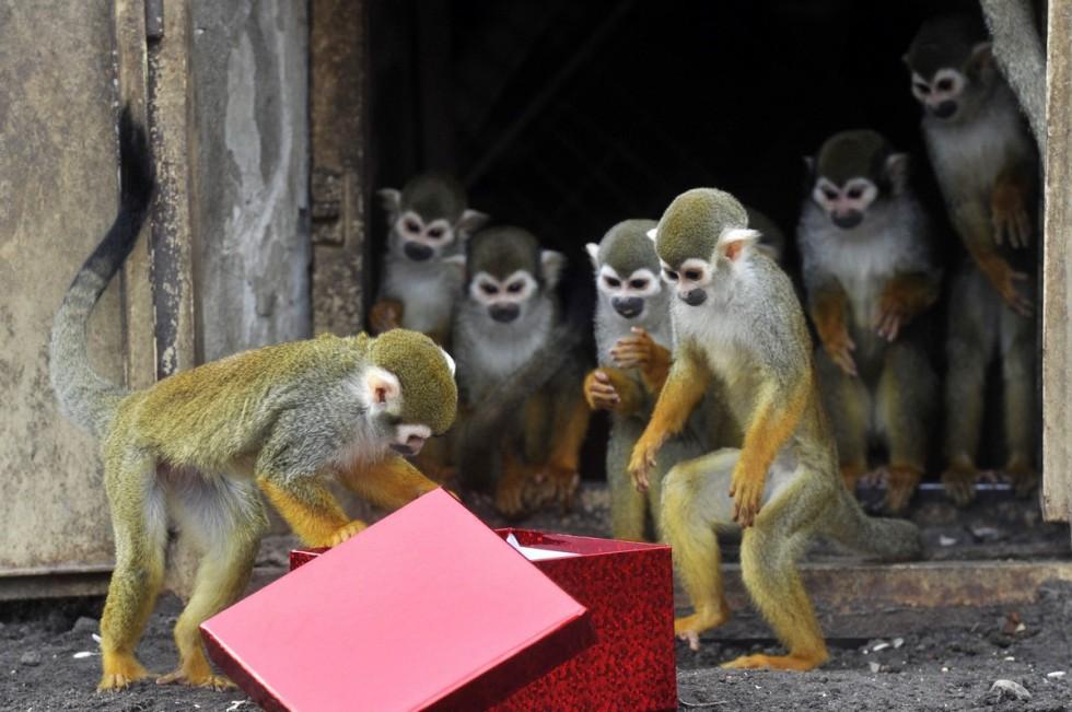 Ajándékot kaptak a budapesti állatkert lakói