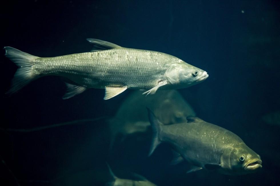 A balin lett az év hala