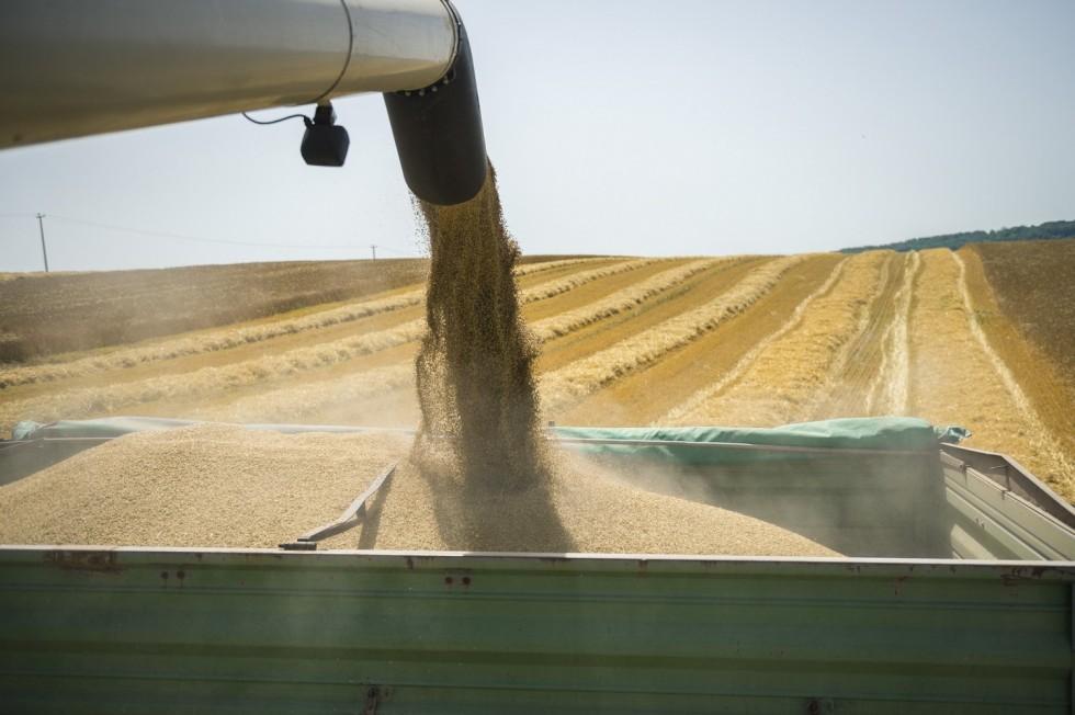 Aratás Baranyában - Búzából kevesebb, kukoricából több t