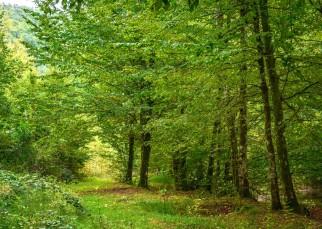 Érintetlen szépség a Király-erdő szívében (11)