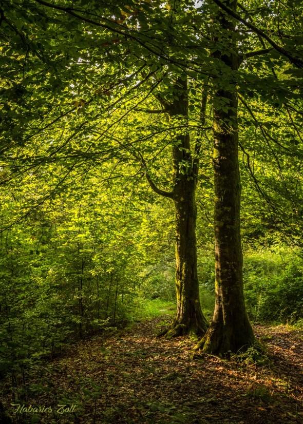 Érintetlen szépség a Király-erdő szívében (13)