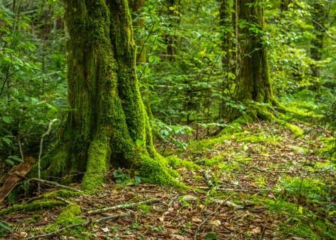 Érintetlen szépség a Király-erdő szívében (14)