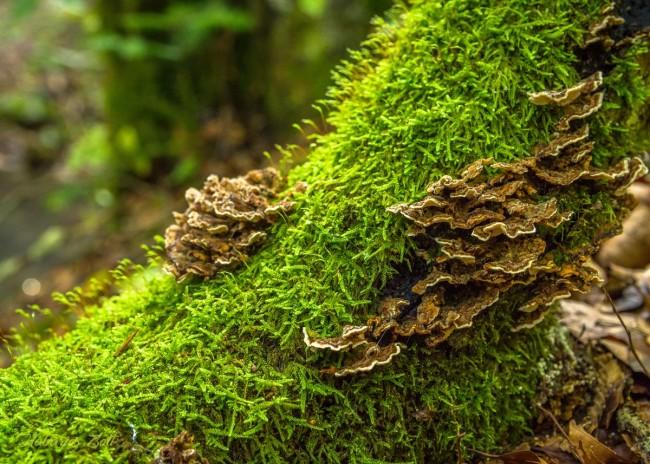 Érintetlen szépség a Király-erdő szívében (15)