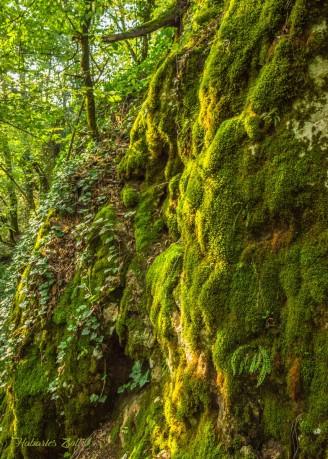 Érintetlen szépség a Király-erdő szívében (16)