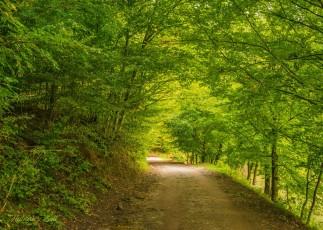 Érintetlen szépség a Király-erdő szívében (20)