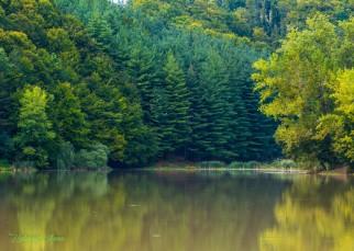 Érintetlen szépség a Király-erdő szívében (4)