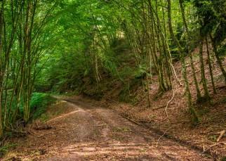 Érintetlen szépség a Király-erdő szívében (6)