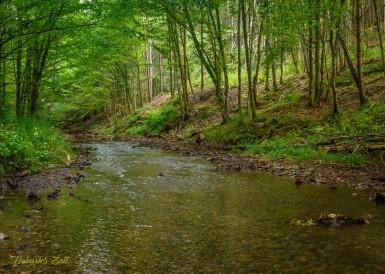 Érintetlen szépség a Király-erdő szívében (7)