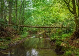 Érintetlen szépség a Király-erdő szívében (8)
